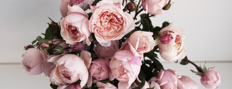 How To Care For Cut Roses